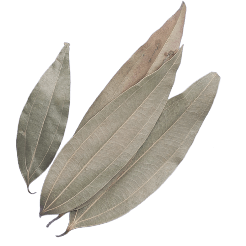 Indian Bay Leaves	indian bay leaf